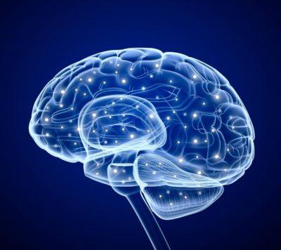 цифровой мозг